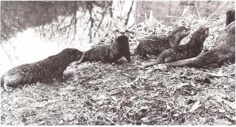 Cómo crecen las crías de mamífero
