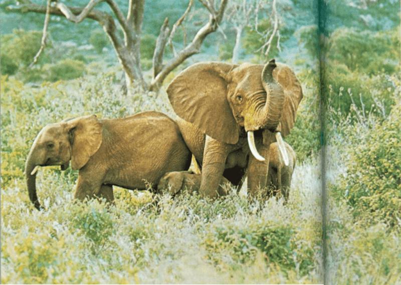 Protegiendo a las crías