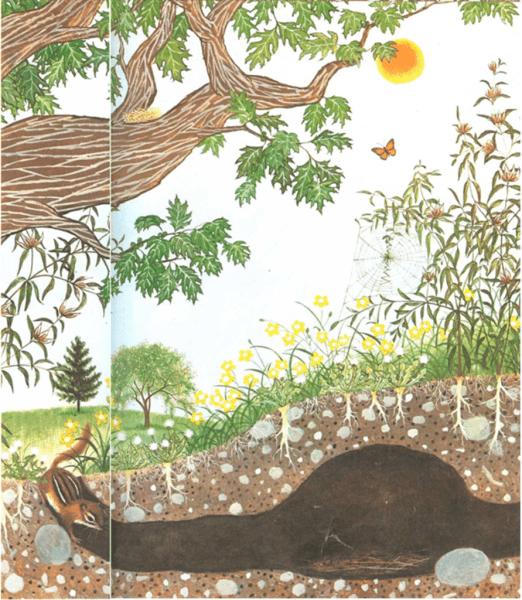 La mariposa y el ranúnculo