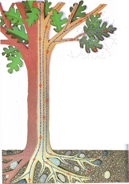Por qu algunos rboles pierden sus hojas en oto o el for Como se llaman los arboles que no pierden sus hojas