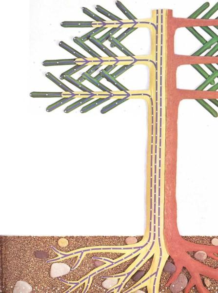 Por qué algunos árboles son verdes en invierno
