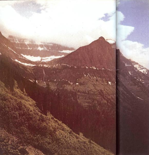 Comunidades de plantas de las montañas