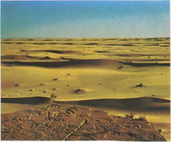 Un océano de arena