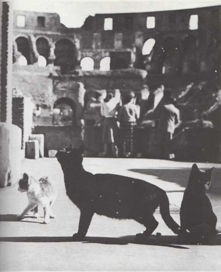 Gatos en el anfiteatro