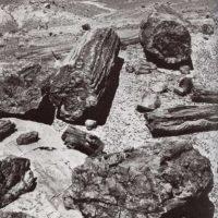 Arboles de piedra