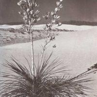 Tierra de arena