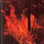 ¿Quién incendió el bosque?