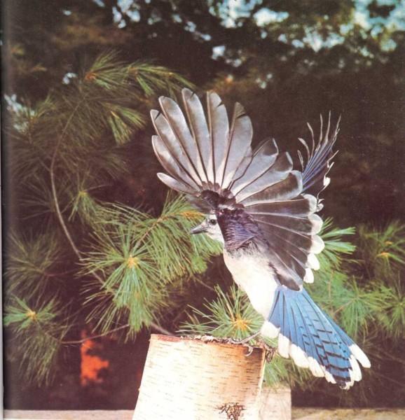 Esta ave