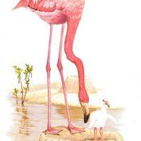 Crías de aves