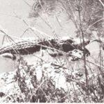 Otros reptiles