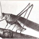 Ruidos que hacen los insectos