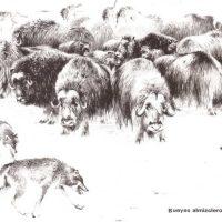 Seguridad en la manada