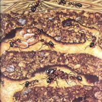 Una ciudad de hormigas