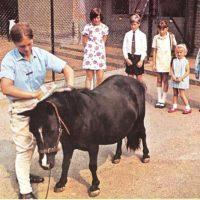 Cuidando a los animales del zoo