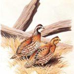 Fotos, dibujos y pinturas de animales