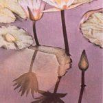 Plantas de los pantanos, lagos y cursos de agua