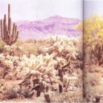 Las plantas de los lugares cálidos y secos
