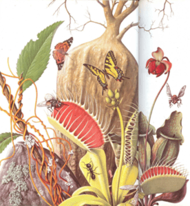 Plantas raras y sorprendentes