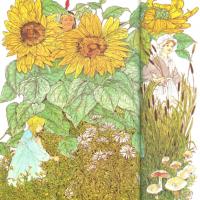 Hierbas y flores silvestres