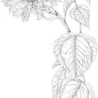 Una planta de sabrosas semillas