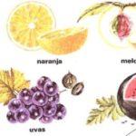 Semillas, tallos y componentes de las ensaladas