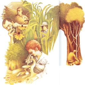 Los hombres y las plantas