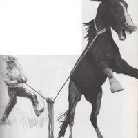 La cuerda del cowboy