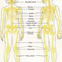 Mi esqueleto